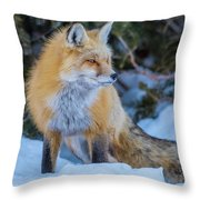 Red Fox At Dawn In Winter Throw Pillow