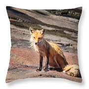 Red Fox In Maine Throw Pillow