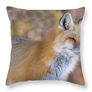 Red Fox In Winter Glow Throw Pillow