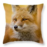 Red Fox Pictures 131 Throw Pillow