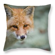Red Fox Pictures 146 Throw Pillow