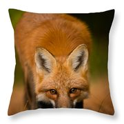 Red Fox Pictures 161 Throw Pillow