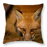Red Fox Pictures 162 Throw Pillow