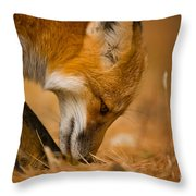 Red Fox Pictures 164 Throw Pillow
