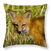 Red Fox Pictures 34 Throw Pillow