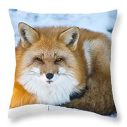 Red Fox Pictures 98 Throw Pillow