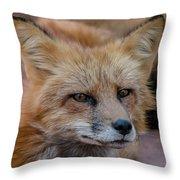 Red Fox Portrait 2 Throw Pillow