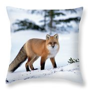 Red Fox Vulpes Vulpes Portrait Throw Pillow