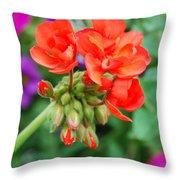 Red Fresh Geraniums Throw Pillow