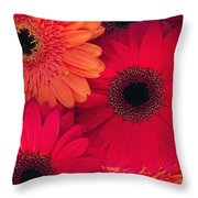 Red Gerbers Throw Pillow