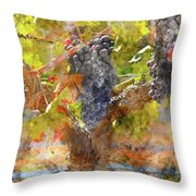 Red Grapes On The Vine During The Fall Season Throw Pillow