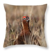 Red Grouse Calling Throw Pillow
