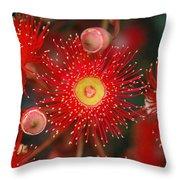 Red Gum Flower Macro Throw Pillow