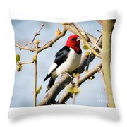 Red-headed Woodpecker At A Glace  Throw Pillow