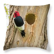 Red-headed Woodpecker At Home Throw Pillow