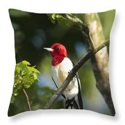 Red-headed Woodpecker Perched On A Tree Throw Pillow by George Grall