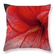 Red Hippeastrum Charisma Throw Pillow