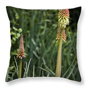 Red Hot Poker Bloom Throw Pillow