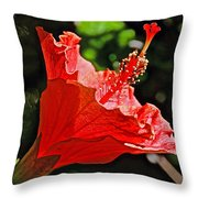 Red Hyacinth At Pilgrim Place In Claremont-california Throw Pillow