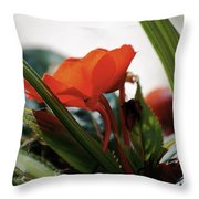 Red Impatiens Throw Pillow