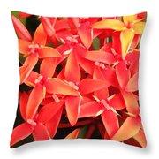 Red Indian Flowers Like Sunshine - Macro Photography Throw Pillow