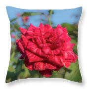 Red Intuition Hybrid Tea Rose, Red Stripe Rose Originally Pr Throw Pillow