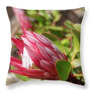 Red King Protea Bud Throw Pillow