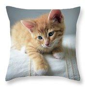 Red Kitten On A Beige Blanket Throw Pillow