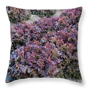 Red Leaf Lettuce Throw Pillow