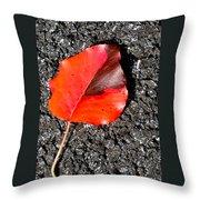 Red Leaf On Asphalt Throw Pillow by Douglas Barnett