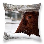Red Milking Devon Snowflakes Throw Pillow
