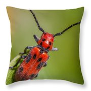 Red Milkweed Beetle Throw Pillow
