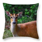 Red Muntjak 2 Throw Pillow