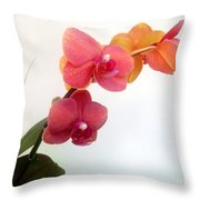 Red Pink Golden Orchid Flowers 03 Throw Pillow