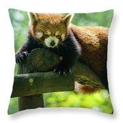 Red Panda Ailurus Fulgens Jerez De La Frontera Spain Throw Pillow
