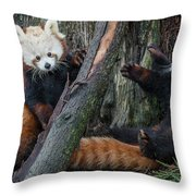 Red Panda Cubs At Play Throw Pillow
