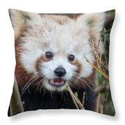Red Panda Wonder Throw Pillow