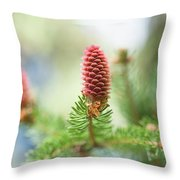Red Pine Cone In Spring Time Throw Pillow