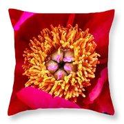 Red Pink Flower Center.  Close-up Center Throw Pillow