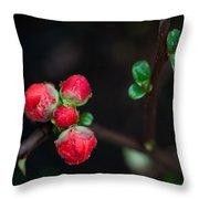 Red Plum Flowers In Rain Throw Pillow