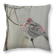 Red Poll In Winter Throw Pillow