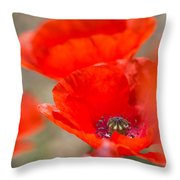 Red Poppy For Remembrance Throw Pillow