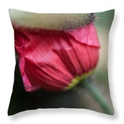 Red Poppy Sneaking Out Throw Pillow