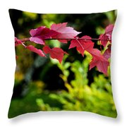 Red Red Maple Leaves Throw Pillow