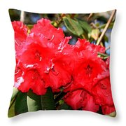 Red Rhodie Throw Pillow