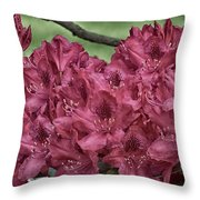 Red Rhodies Throw Pillow