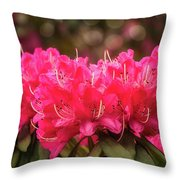 Red Rhododendron Flowers At Floriade, Canberra, Australia. Throw Pillow