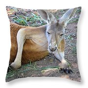 Red Roo Resting Throw Pillow