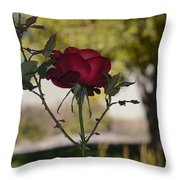 Red Rose 1 Throw Pillow