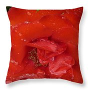 Red Rose After Rain Throw Pillow